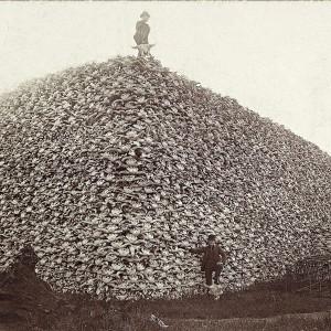 s mountain of buffalo skulls