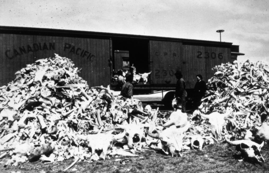 BE  buffalo bones being loaded into rail car