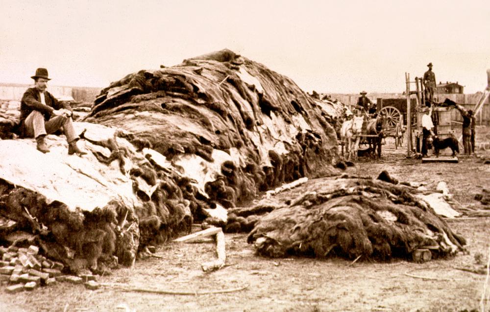 photo of hide yard  buffalo hides baled for shipment Dodge City Kansas