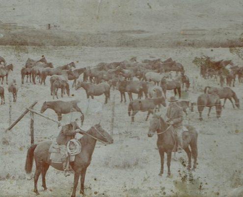 John Grant horses